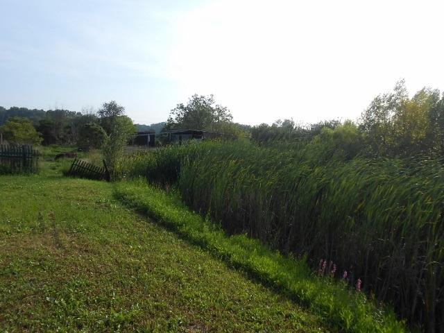 Levá část zahrady od jezírka