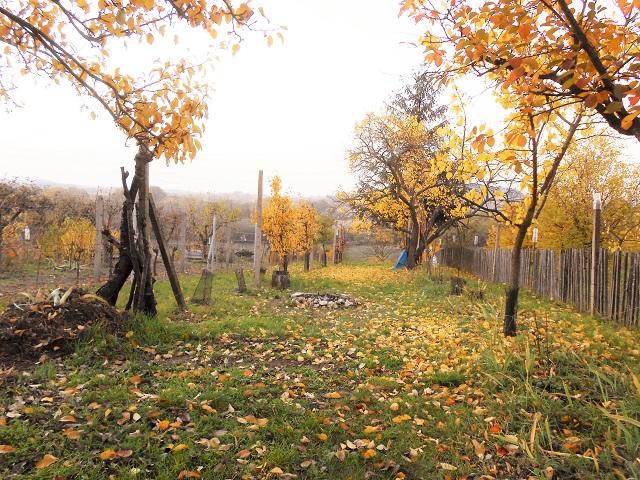 Ovocné stromy a vinohrad