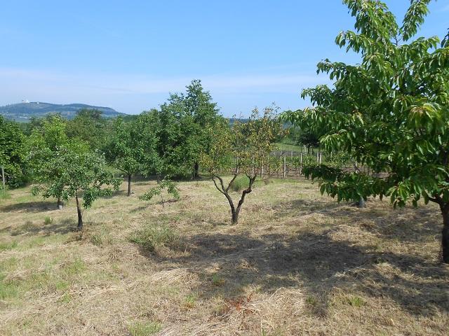Ovocné stromy vpravo