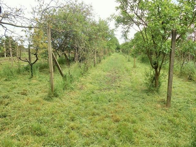 Vinohrad, přední část