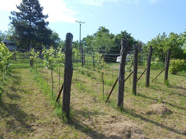 Vinohrad, horní část zleva