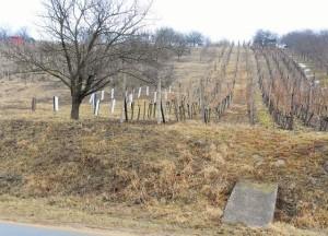 Prodej vinohradu asadu 2 383 m², Kraví Hora, Bořetice