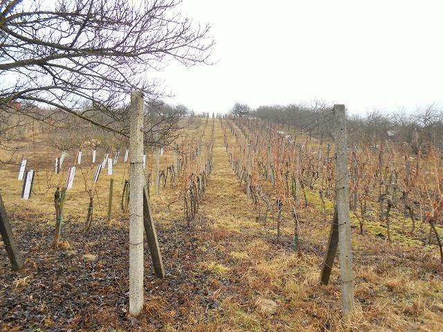 Vinohrad přední část vzimě