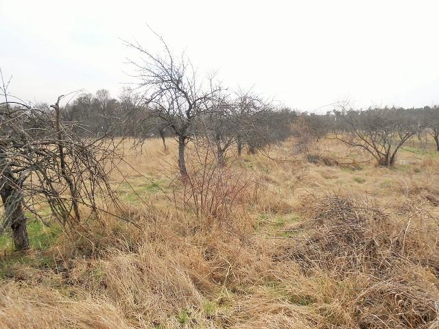 Pohled k zadní části pozemku