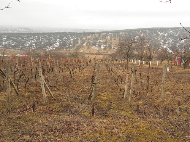Vinohrad zadní část vzimě