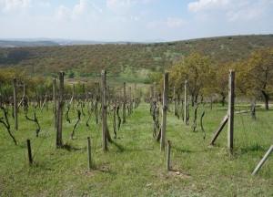 Prodej vinohradu s ovocným sadem 3 418 m², Kraví Hora, Bořetice