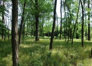 Prodej lesa 1906 m², Horní Bojanovice