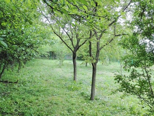 Zahrada, pravá strana odspodu