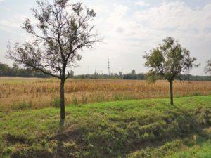 Prodej pole id. ½ 4 833 m², Břeclav