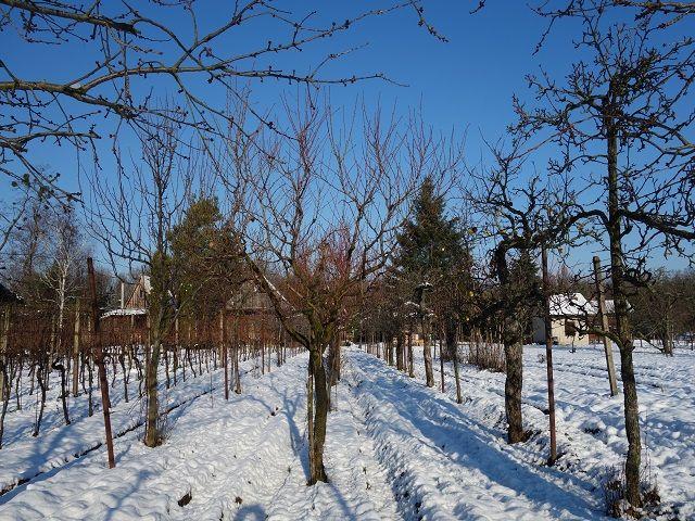 Sad, pohled od vinohradu